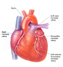 View larger diagram of the heart